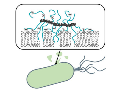 Membrane Active Antimicrobial Polymers