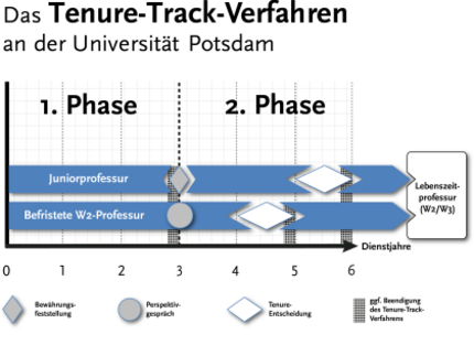 Two phases of the tenure track procedure (W1- and W2-level)