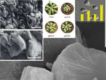 Collage of several images: electron microscope images of parts of plants and images of plants